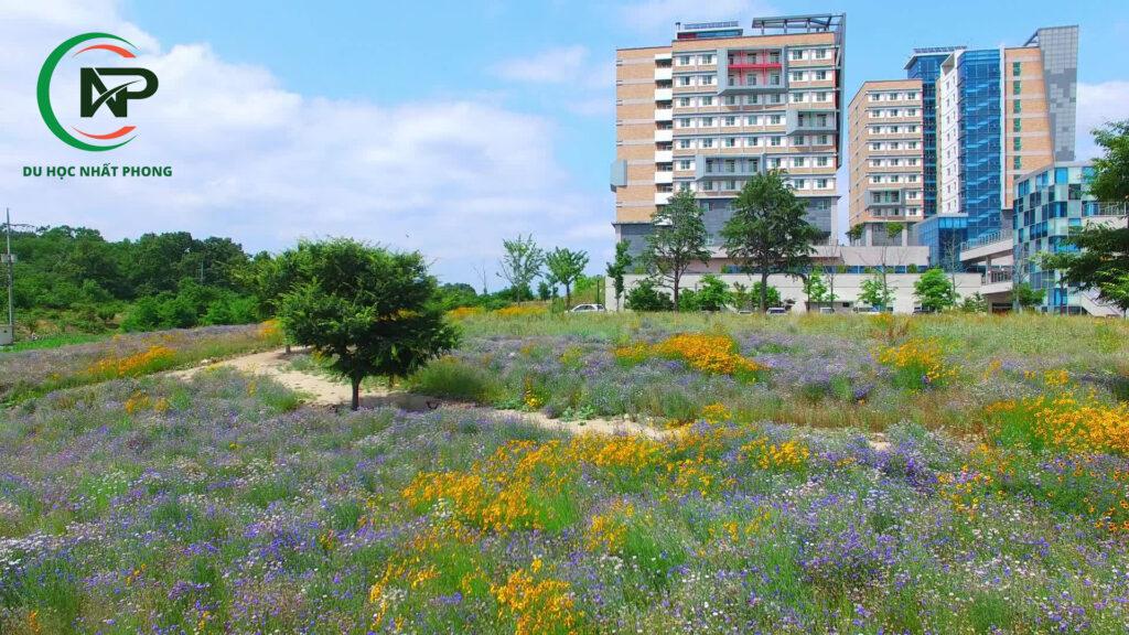 Khuôn viên trường đại học Daegu