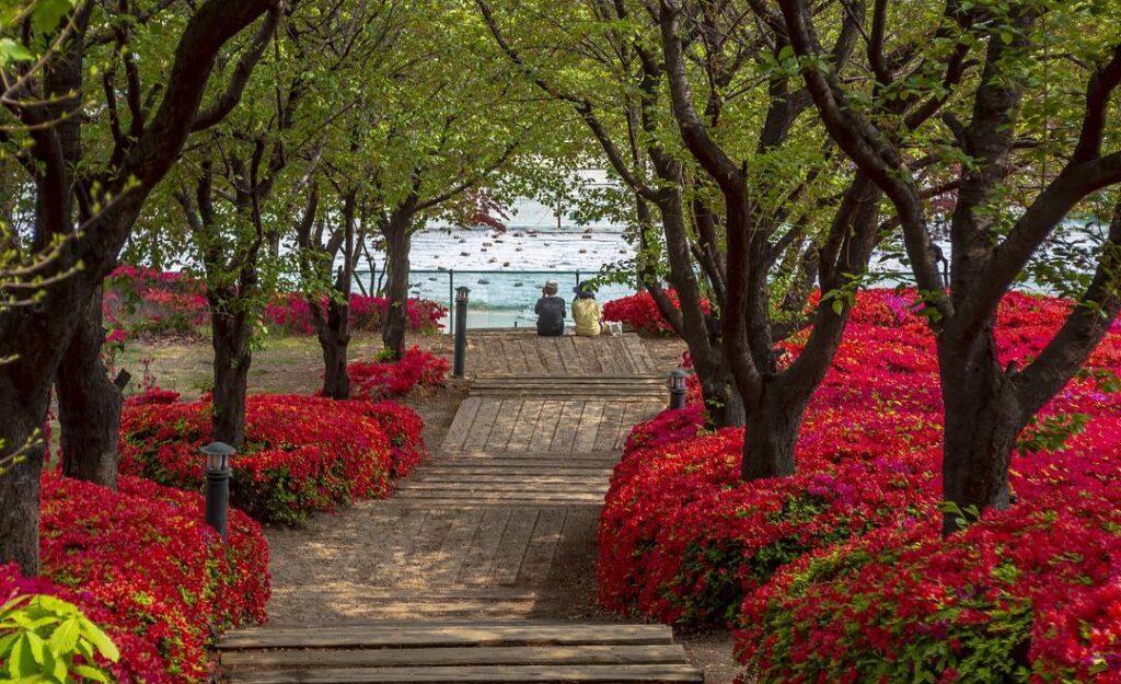 Khuôn viên xinh đẹp trường đại học Korea